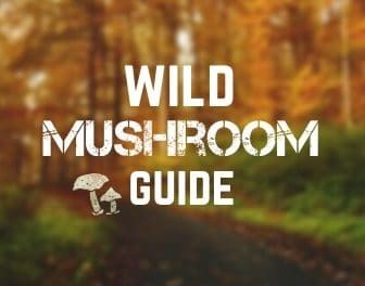 Wild mushrooms guide   Which ones to eat and which to avoid