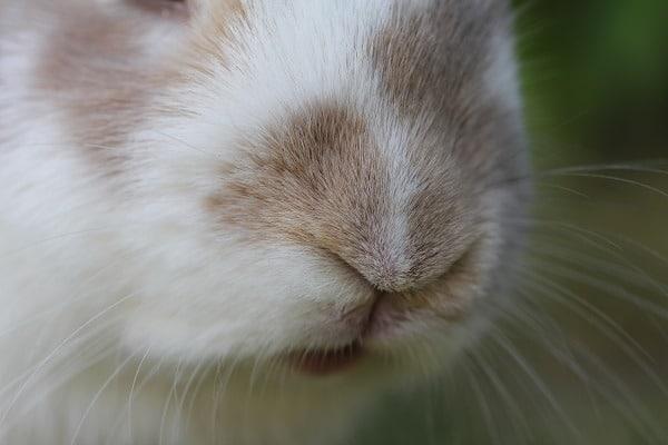 survival animals rabbits