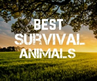 Best Survival Animals in a SHTF Situation? You'll Be Surprised!