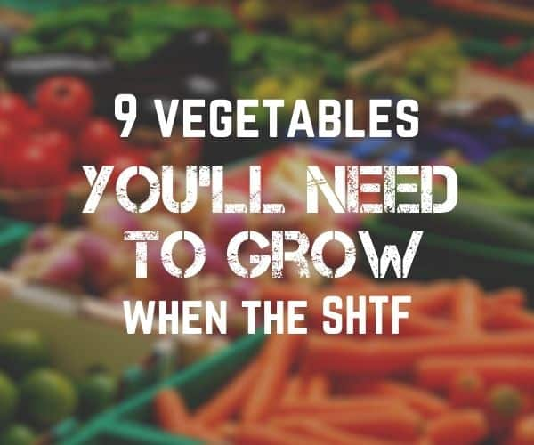 9 vegetables you'll need to grow when the SHTF