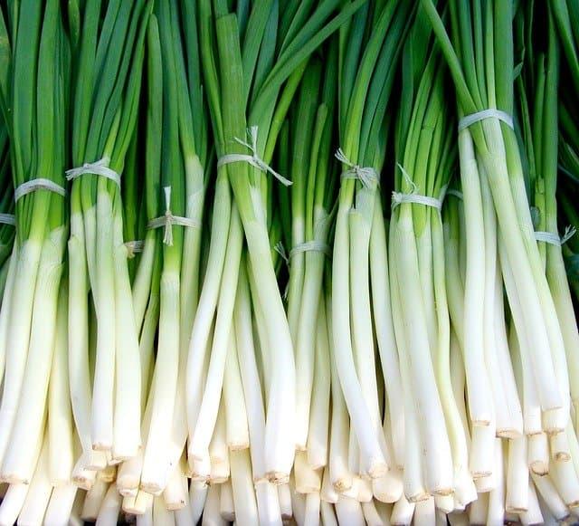 growing green onions
